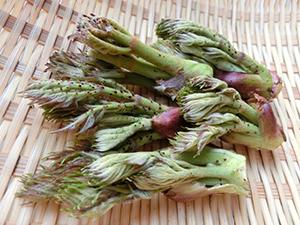 春到来!山菜と春野菜の苦味は大人への階段。