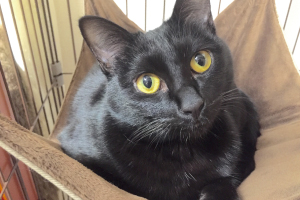 我が家の黒猫、その名は…!