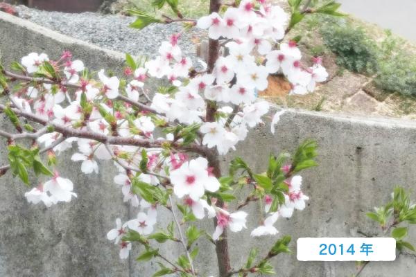 Syohin_Yamaoka_10_01