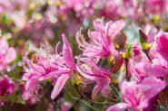 春爛漫、京都の知られざる名庭「白龍園」へ