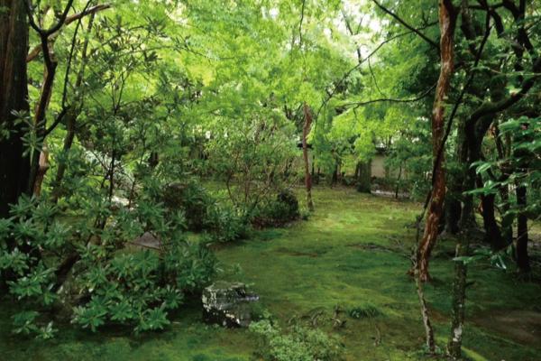 旅ドキ番外編:雨の日に京都を観光したら思いのほか絶景に巡り合えた話。