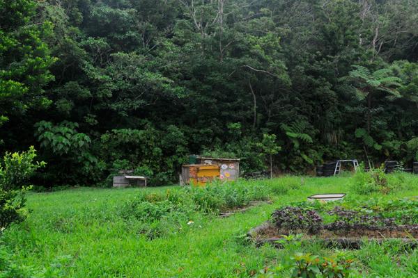 旅するFood記番外編/第3回:沖縄やんばるの自然の中で、パーマカルチャーという生き方に触れる旅