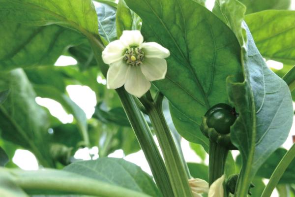 竹森のおいしい農業/夏から秋の農業事情